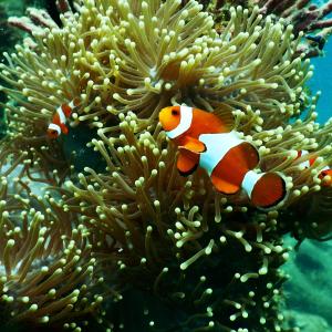 Marine fish and reef